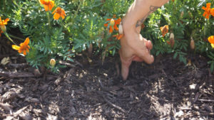 Irrigation soil moisture check